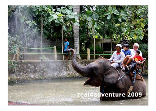 elephant-2