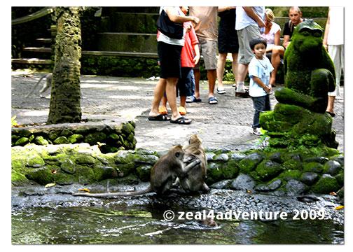 monkeys-2