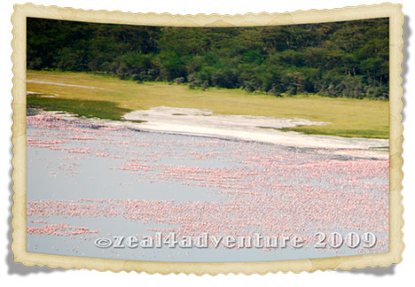 flamingoes-from-cliff