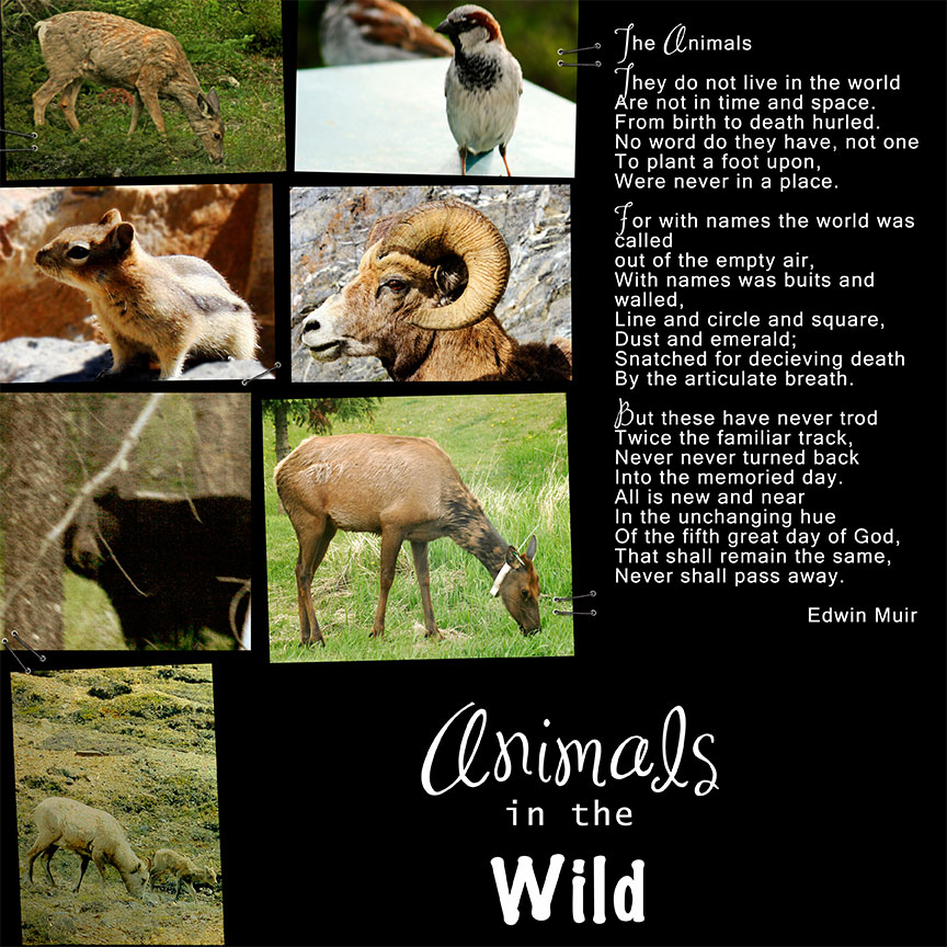 Anmals-in-the-Wild
