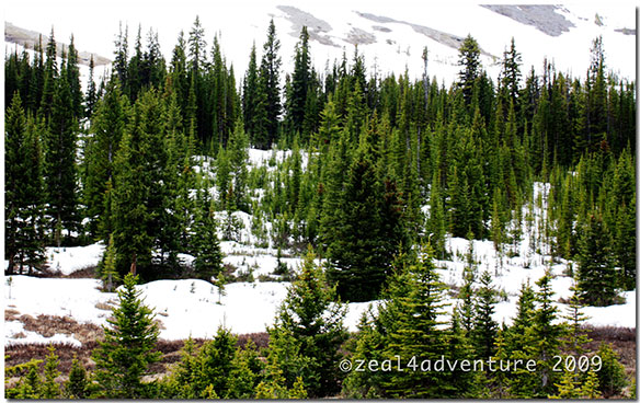 Parker-Ridge-Trail-2