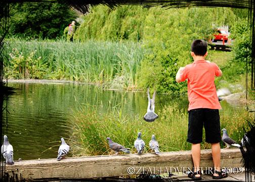 feeding-the-pigeons-2
