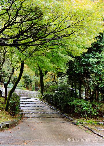 murayama-trees
