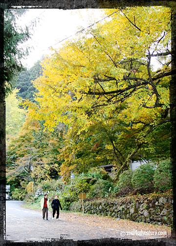 Jinya-scenic-walk-4