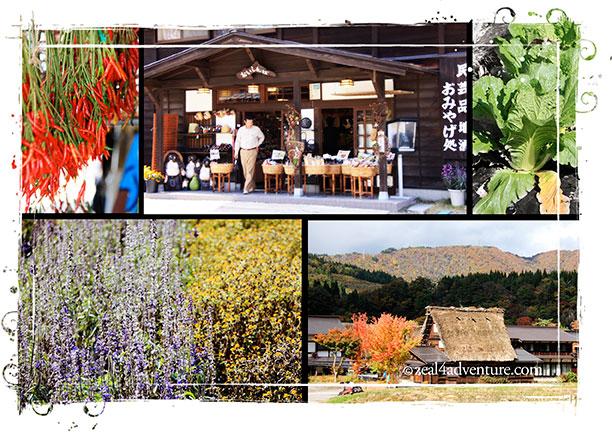 omigachi-collage