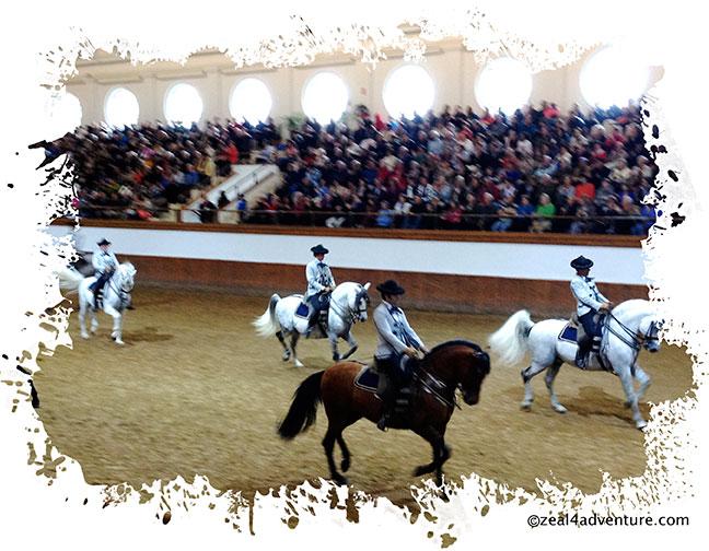 Horse-performance-2