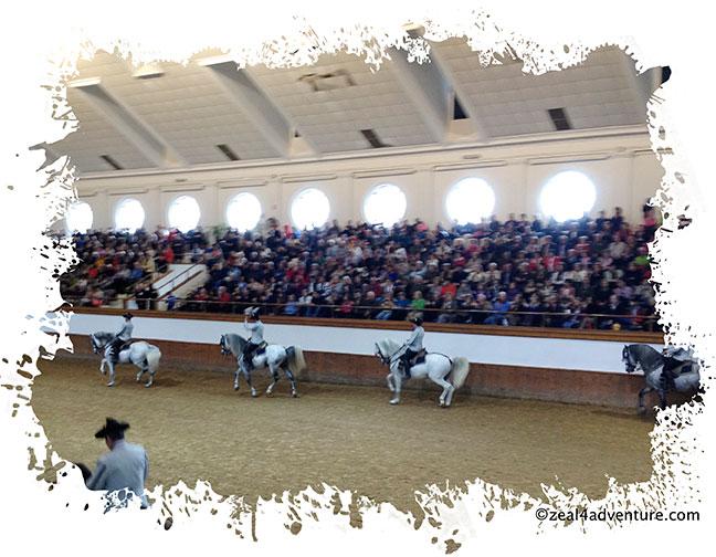 Horse-performance