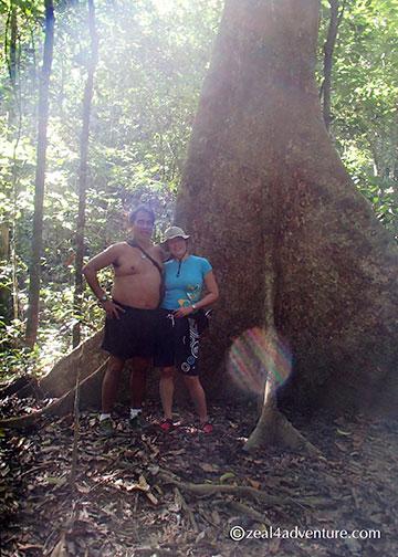 dwarfed-by-trees