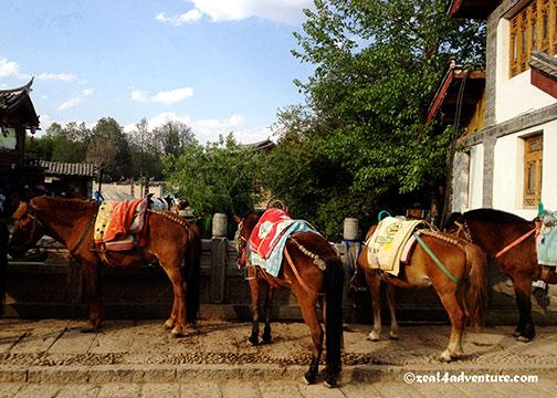 horses-on-qinglong
