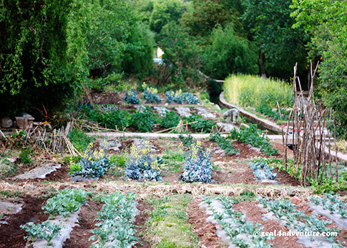 shuhe-vegetable-garden