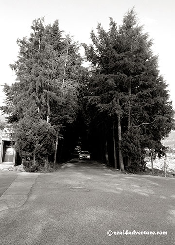 tree-lined-2