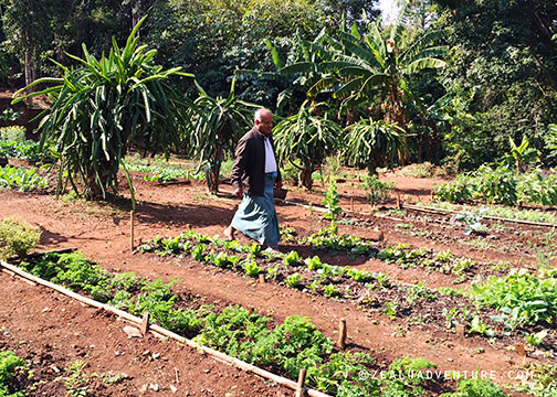 Organic-garden-and-Ko-Htwe
