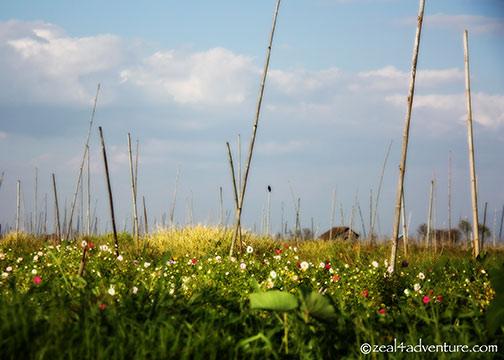 flower-floating-farm